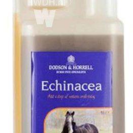 Dodson & Horrell Echinacea