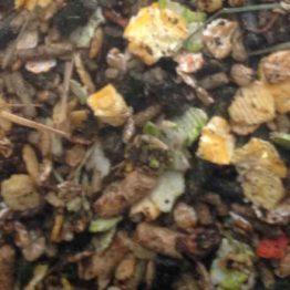 RWDH Guinea Pig Mix Cavia Mix voerfoto