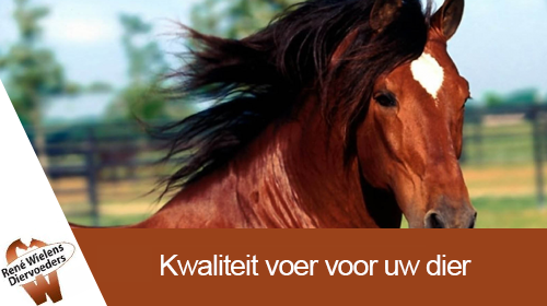 Kwaliteitsvoeding voor paarden, honden, huisdieren en hobbydieren