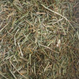 Horse Just Grass
