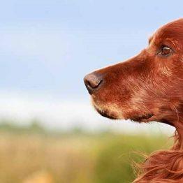 Glutenvrij hondenvoer