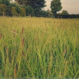 Simple System Natural Grazing Mix