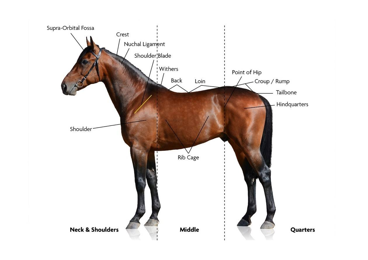 Vetscore Paard vet of fit?
