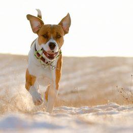 Super Premium hondenvoer